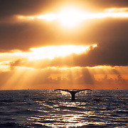 god ray on whale