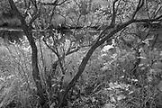 Seine River Forest, Winnipeg, Manitoba, Canada