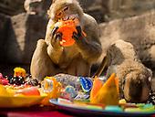 Lopburi Monkey Party
