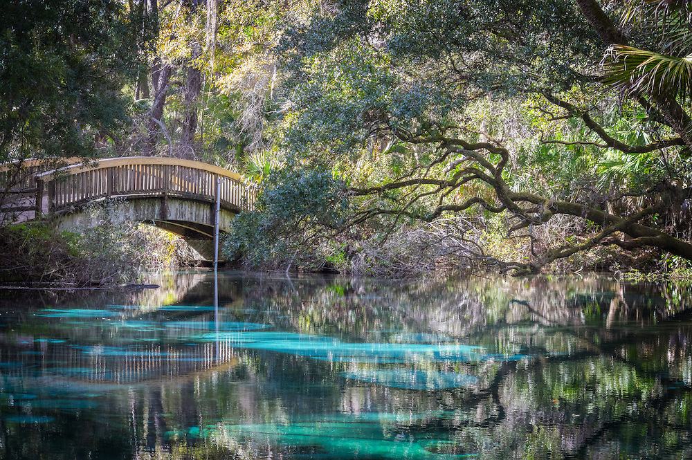 Crystal clear waters adorn the oasis that is Juniper Springs in the Ocala National Forest of Florida, canopied by palm and oak trees, producing from the limestone up to 13 million gallons of fresh water a day.
