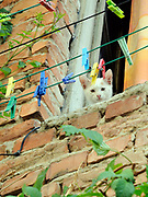 A cat looks out of an open window in an old building. Tirana, Albania. 02Sep15