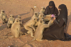 November 10, 2018 - Pushkar, Rajasthan, India - Muslim women feeding monkeys in Pushkar, Rajasthan, India. (Credit Image: © Shaukat Ahmed/Pacific Press via ZUMA Wire)