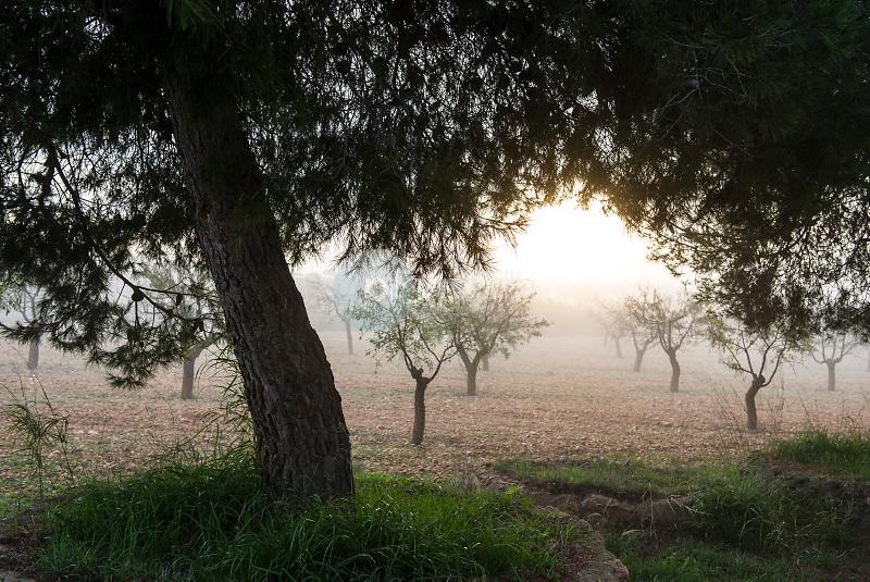 Encinas (Quercus ilex). Almansa. Albacete ©Antonio Real Hurtado / PILAR REVILLA