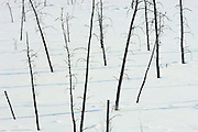 Trees and shadows in frozen wetland<br /> Fort Frances<br /> Ontario<br /> Canada
