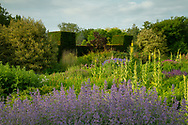"""Nepeta 'Walker's Low"""" and Verbascum phlomoides in the contemporary border at Waterperry Gardens, Waterperry, Wheatley, Oxfordshire, UK"""
