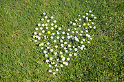 Wild flowers growing in the shape of a heart on grass