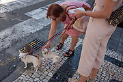 A stranger bends down to fondle another ladys pet chihuahua while waiting to cross the road, on 21st July, in Porto, Portugal. The poor pooch looks unhappy at being touched by  stranger and tries to twist its head out of the womans grip.