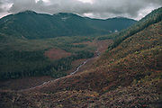 N77A0234.jpg<br /> A look into an old growth clear cut on Prince of Wales Island in the Tongass National forest in Southeastern Alaska. The land pictured is owned by SeAlaska, one of several Native Corporations that were returned ownership from the federal government of hundreds of thousands of Acres of traditional lands as part of the Alaska Native Claims Settlement Act (ANCSA). As part of the legislation around these corporations, they are required to return value to their shareholders, and in Southeast Alaska logging was the primary industry and resource available. As such, harvesting timber was seen as the most immediate way to fulfill these obligations. As of 2018 however, there became a new way to make money off these trees…leaving them in the ground. As a result of California's Cap and Trade laws, corporations seeking offsets for Carbon emissions have paid SeAlaska to leave certain areas of land untouched, thus making it possible to earn revenue while leaving ecosystems intact.