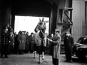 Grand National Winner 'Quare Times' arrives at North Wall from Aintree.29/03/1955...From: http://www.sportsbookguardian.com/horse-racing/grand-national/winners/quare-times-1955..1955 was truly a year for mudlarks, the going was bottomless in the truest sense of the word! Umbrellas were the must have accessory as the track was deluged by three days of heavy unrelenting rain!..On the day of the race the decision was taken to miss out some of the track, including the water jump. As would be expected in the heavy going, there were plenty of fallers...Quare Times won in good style, and relished the sticky conditions. Tudor Line would once again come second, but this time its margin was a dozen lengths instead of a neck...The winner's pedigree was Artists Son (Gainsborough)- Lavenco. On a sour note the day had the lowest attendance in the race's recorded history, the 1950's proving a low point in Aintree's history. However the race was well attended by Royalty with the Queen Mother having M'as Tu Vu running in the race. If the Queen Mum had backed her horse at 22/1 she would have been dismayed, as it was a faller...The trainer of the winner was Vincent O'Brien, who amazingly had trained a third successive National winner, on each occasion triumphing with different horses!...Quare Times.Starting Price: 100/9.Age: years.Winning Distance: unknown.Owner: Cecily Welman.Jockey: Pat Taaffe.Weight Carried: 11st.Runners: 30.2nd: Tudor Line.3rd: Carey's Cottage.4th: Gigolo