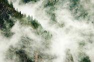 Clearing clouds reveal precipitous  cliffs, in Stevens Canyon Mt Rainier National Park, Washington, USA