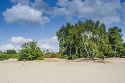 Postiljon, Laren, Noord Holland, De Witte Bergen