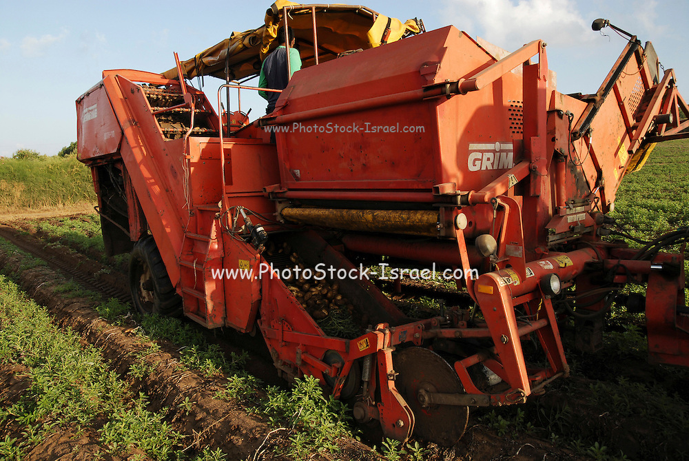 Potato Harvesting. The potatoes can be seen traveling up the conveyer belt