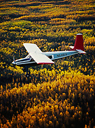 Bob Bursiel flying Wright Air's Helio Courier H-295 over boreal forest turning autumn gold near the Wood River south of Fairbanks, Alaska.