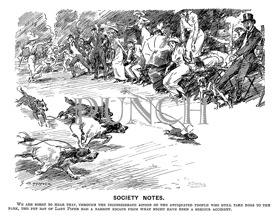 Society Notes. We are sorry to hear that, through the inconsiderate action of the antiquated people who still take dogs to the park, the pet rat of Lady Piper had a narrow escape from what might have been a serious accident.