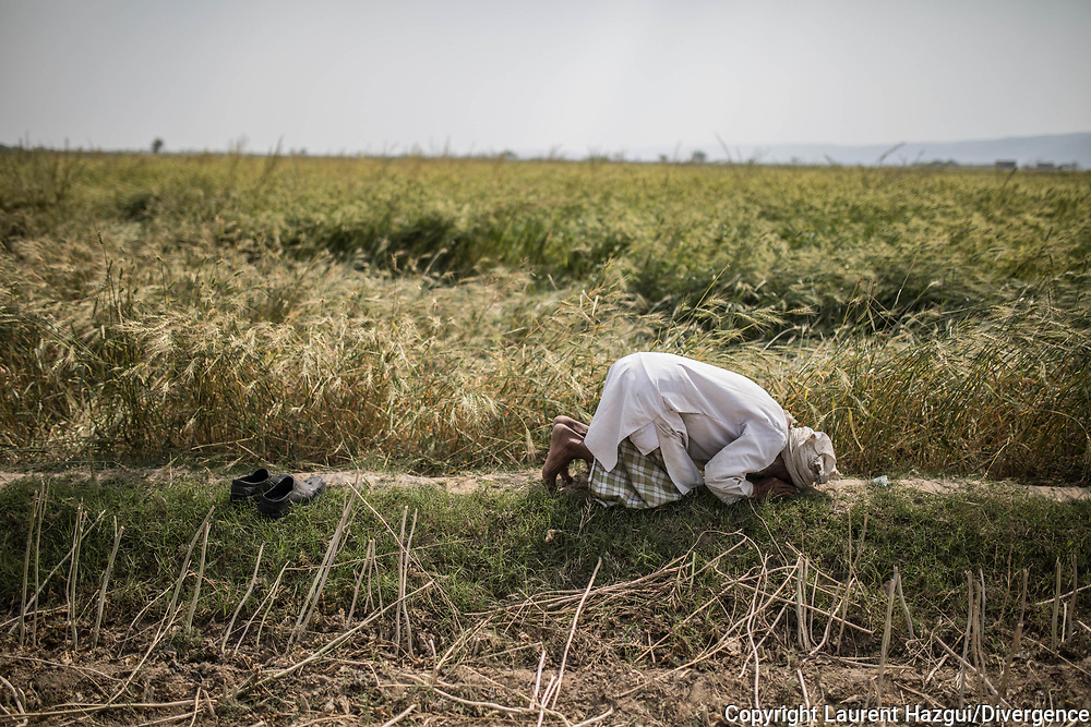 Trafic d'épouse 11032019. Haryana. Biwhat district. Village. Debout sur une boursouflure de terre entre deux parcelles, les mains jointes sur son ventre, puis courbé au sol, Ayub prie. Il dit avoir soixante ans, mais les profonds sillons sur son front et ses joues lui donnent l'air d'un vieil homme. Après le décès de sa première femme, morte sans enfant, aucune famille n'a accepté qu'il épouse leur fille. « Parce que je n'ai pas de terres », juge-t-il, assis au milieu des plants de moutarde. Il assure les récoltes pour le compte d'un « chef » qui lui reverse 300 roupies par jour, soit moins de cinq euros. Alors, Ayub a acheté Shahina, une femme de l'Assam, une région montagneuse du nord-est de l'Inde, deux fois plus jeune que lui. « Pour me servir, justifie-t-il, pour préparer les repas et travailler avec moi. » Le paysan admet avoir versé 5 000 roupies (60 euros) à un intermédiaire à l'origine de leur union.
