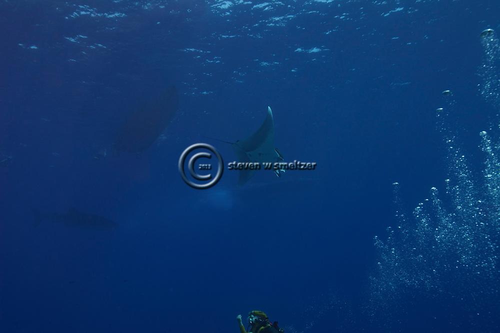 Oceanic Manta Ray, Manta birostris, Hawaii, Molokini Crater Oceanic Manta Ray, Manta birostris