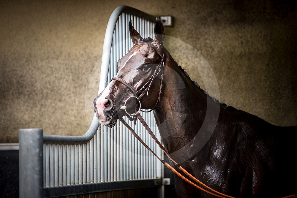 Signs of Blessing after winning Prix Maurice de Gheest in Deauville 07/08/02016