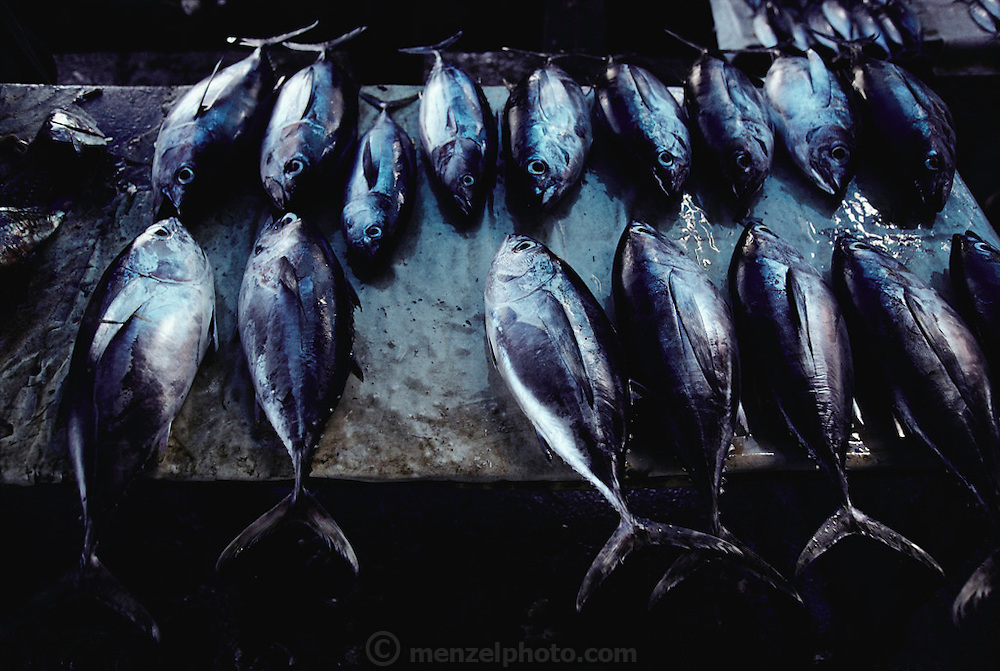 Freshly caught fish for sale in the market in Jayapura, Irian Jaya, Indonesia.