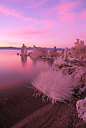 Evening light on tufa formations and salt covered rabbit brush at the south shore of Mono Lake, Mono Basin National Scenic Area, California