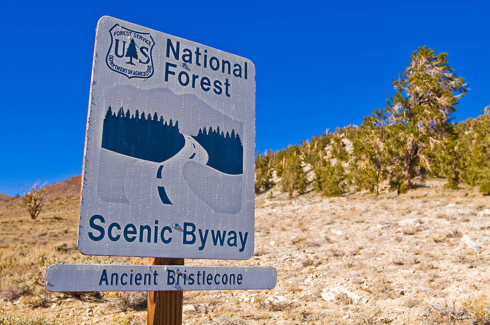 National Forest scenic byway sign, Ancient Bristlecone Pine Forest, Inyo National Forest, White Mountains, California