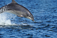 Dolphin, Scotland
