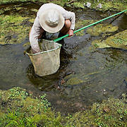 """Doug Duncan, a fisheries biologist for the U.S. Fish and Wildlife Service, checks his net for a Gila topminnow.  After identifying one Duncan commented, """"I haven't heard of topminnow being here (north of San Lazaro, Sonora) since 1997.""""  The Gila topminnow, that is now endangered, was once one of the most common native Arizona fish."""