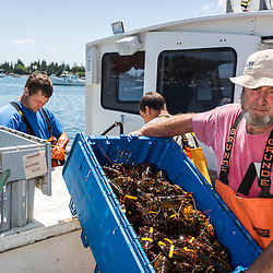 Captain Walter Day unloads lobsters from his boat at the Vinalhaven Fishermen's Co-op in Vinalhaven, Maine.