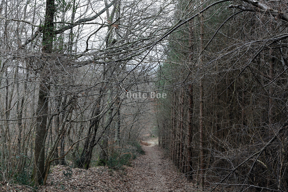 path through a forest with on each side a different tree growth