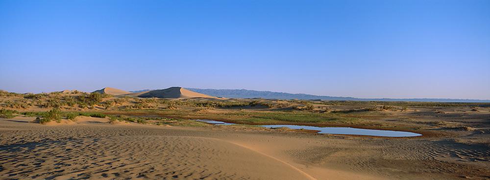 Oasis, Hongryn Eels, Gobi Desert, Mongolia