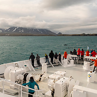 Guests on the bow of the National Geographic Orion watch killer whales surface in Royal Bay on the north coast of South Georgia Island.