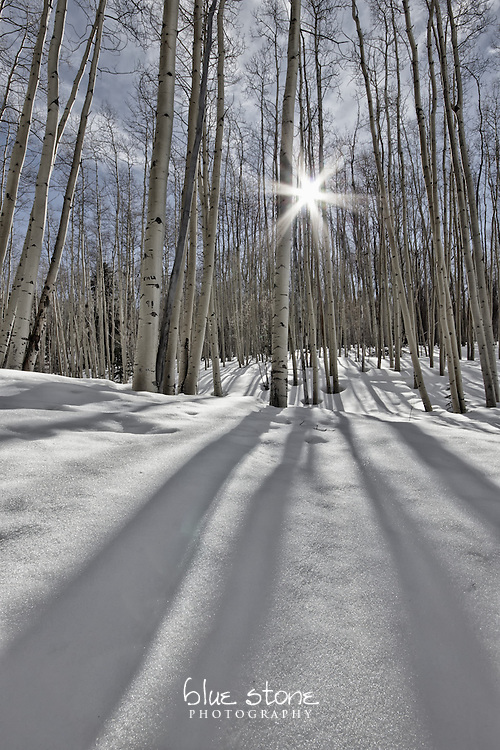 Sunlight flirts with aspens that sleep among a blanket of winter snow.<br /> <br /> Wall art is available in metal, canvas, float wrap and standout. Art prints are available in lustre, glossy, matte and metallic finishes.