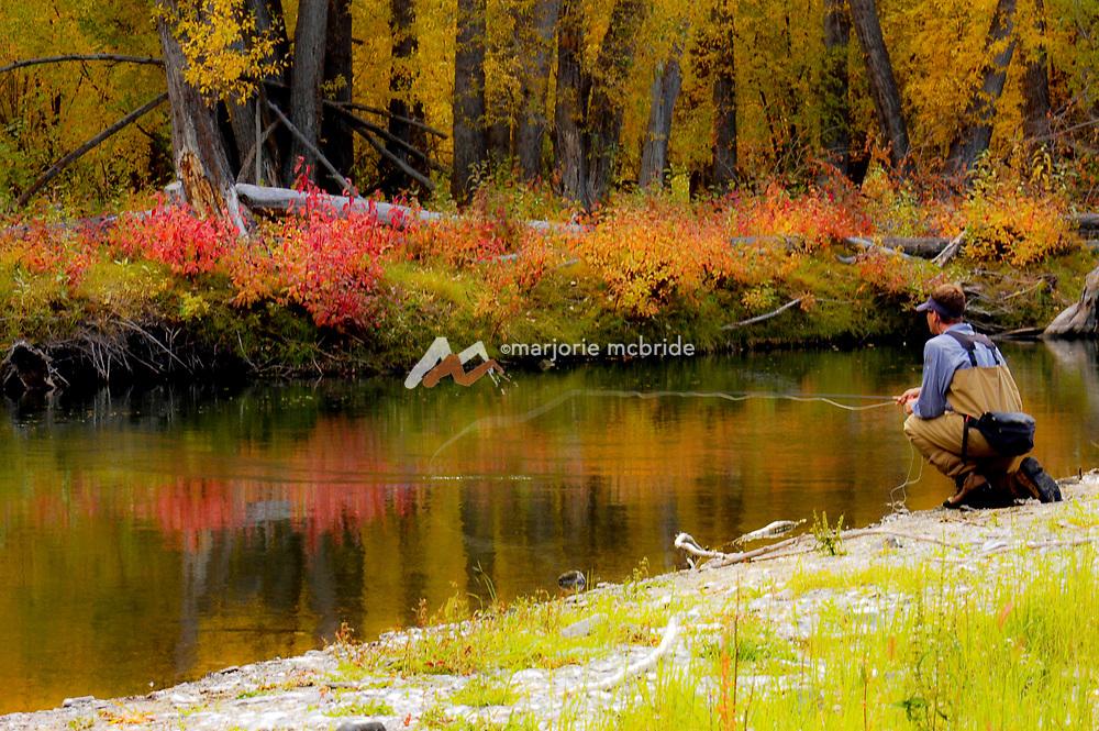Fly fishing the Big Lost River during autumn, Mackay Idaho.