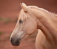 Monument Valley, horse, Arizona