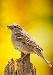 A friendly sparrow on a sunny perch soaking up some afternoon warmth