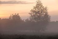 birch trees in the Wahner Heath near Telegraphen hill, morning fog, Troisdorf, North Rhine-Westphalia, Germany.<br /> <br /> Birken in der Wahner Heide nahe Telegraphenberg, Morgennebel, Troisdorf, Nordrhein-Westfalen, Deutschland.