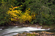 Fall colours along the Little Qualicum River in Little Qualicum Falls Provincial Park on Vancouver Island, British Columbia, Canada