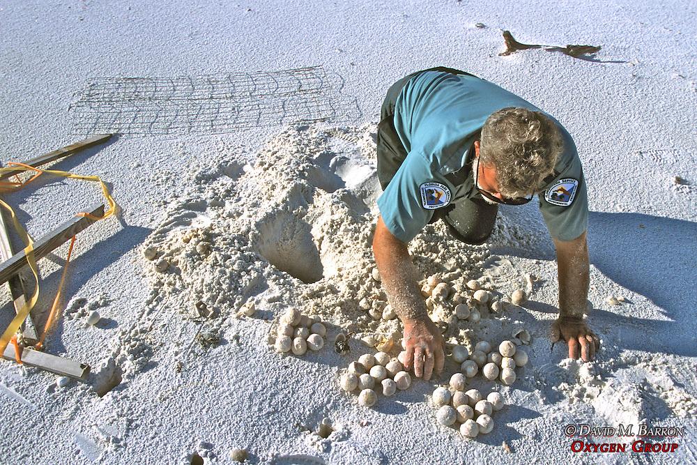 Joe Removing Turtle Eggs