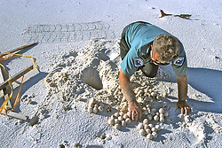 Joe Removing Turtle Eggs