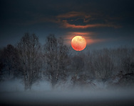 The full moon of the end of November rising from behind a foggy forest in the countryside near to Scalenghe in Piedmont, Italy
