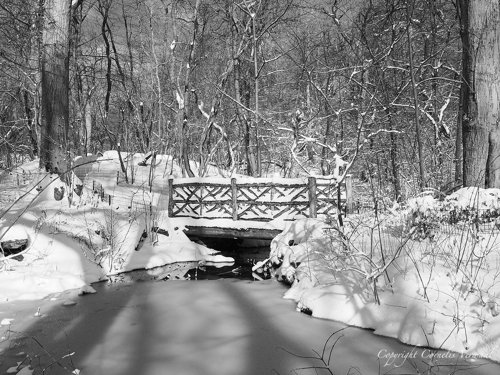 Winter scene and rustic bridge in The Ramble of Central Park