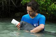 West Indian manatee (Trichechus manatus) <br /> Wildtracks<br /> Manatee Rehabilitation Center<br /> Sarteneja<br /> Belize,<br /> Central America<br /> & Daryn Wood