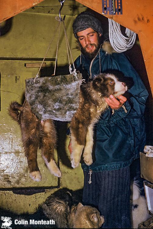 Peter Otway weighs husky pups, Scott Base, June 1961,