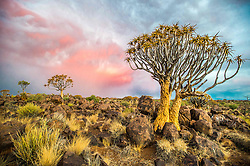 March 3, 2015 - Keetmanshoop, South Africa - Keetmanshoop, Namibia - Quiver tree forest in the Playground of the Giants (Credit Image: © Edwin Remsberg/VW Pics via ZUMA Wire)