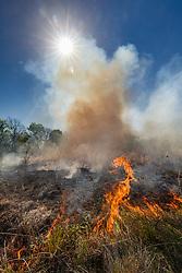 Controlled burn on the Matthews Prairie, owned by the Native Prairies Association of Texas. Farmersville, Texas, USA.