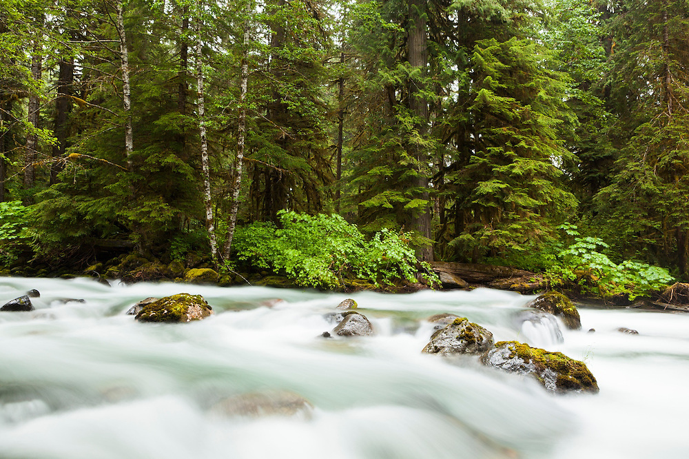 Boulders and trees along the North Fork Cascade River, Mount Baker-Snoqualmie National Forest, Washington.