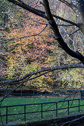 Pictured: <br />The leaves are turning along the River Almond, Cramond, which leads to the River Forth.  Heavy rain as increased the flo and dynamics of the river<br />Ger Harley | EEm 5 November 2019