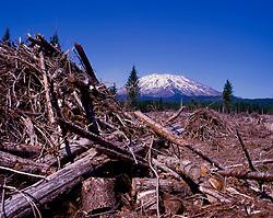 Logging Debris on South Side of Mt. St. Helens, Mt. St. Helens National Volcanic Monument, Washington, US