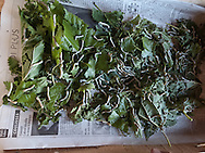 silkworn house museum , production, parc des cevennes, cevennes , france  /  musee du ver a soie, parc des cevennes, écomusée du parc national des Cévennes cevennes , france