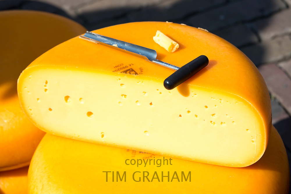 Sample of Gouda wheel being sampled by a cheese scoop at Alkmaar cheese market, The Netherlands