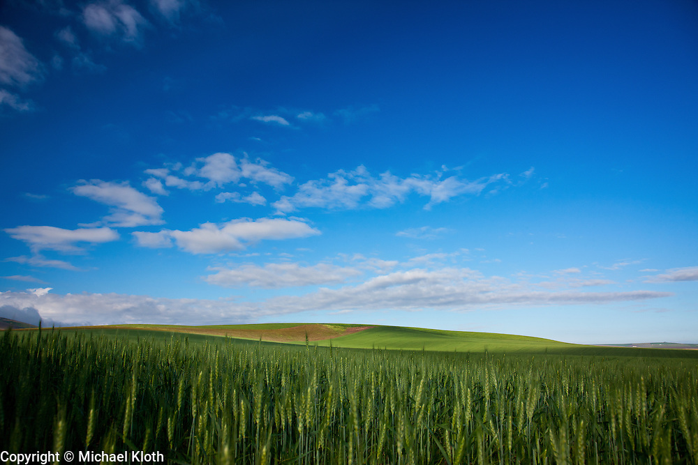 Wheat field in either Kennewick or Finley.  It's hard to know where the lines are drawn out in these wide open spaces.